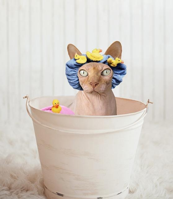 Sphynx, Cat, Bathtub, Rubber Ducky, Bucket, Hairless