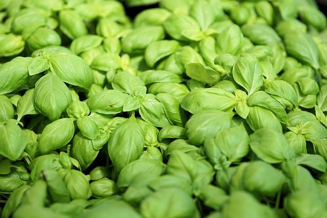 Basil, Plant, Spice, Herbs, Vegetarian, Green