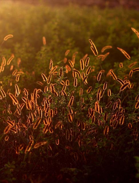 Spice, Camp, Sunset, Light
