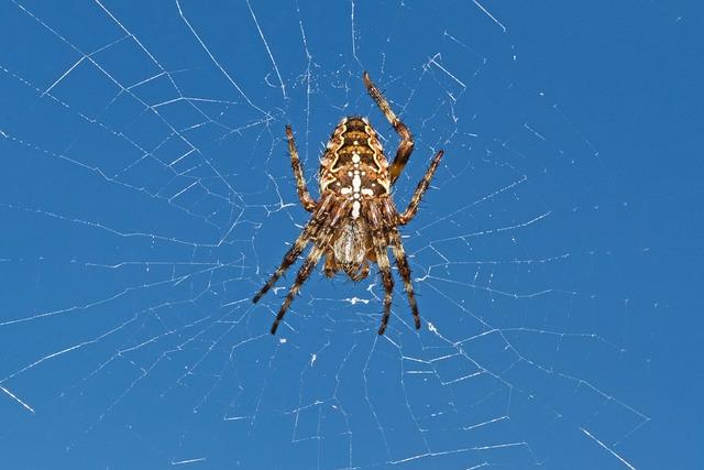 Garden Spider, Spider, Araneus Diadematus, Arachnid