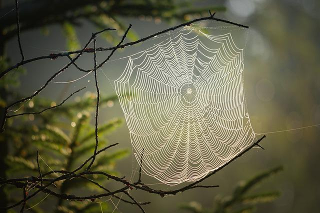 Cobweb, Spider, Insect, Nature, Web, Creepy, Case