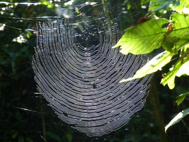 Web, Spider, Nature, Cobweb, Insect, Forest, Jungle