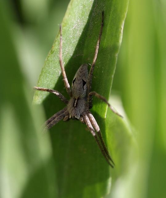 Spider, Arachnid, Gray, Rest