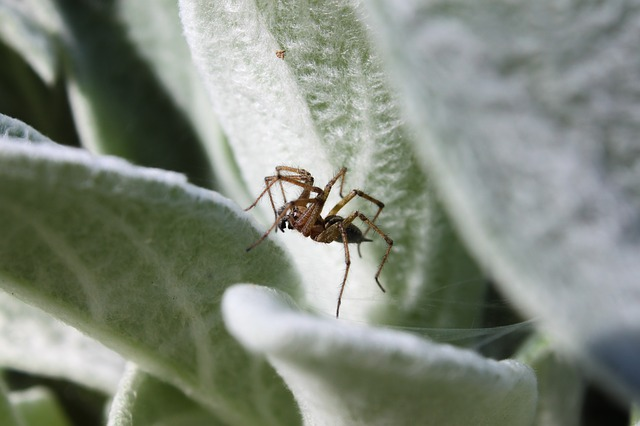 Insect, Nature, Leaf, Spider
