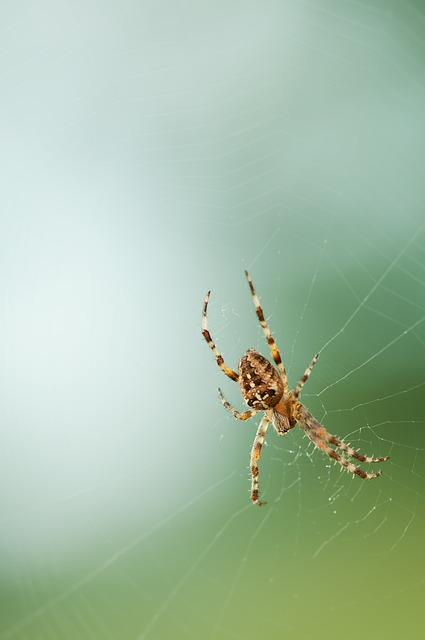 Spider, Web, Nature
