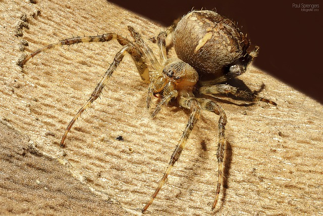 Spin, Arthropods, Spiders, Close Up, Macro