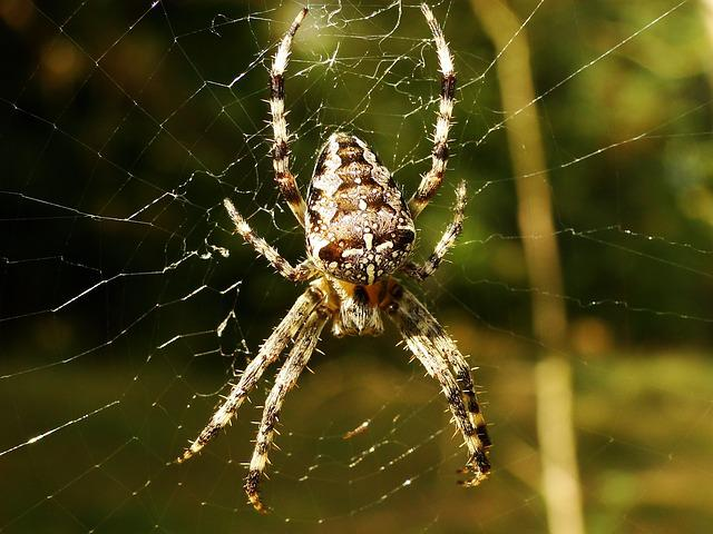 Spider, Arachnid, Spider's Web, Cobweb, Insect, Animals