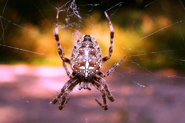 Spider, Arachnid, Spider's Web, Insect, Invertebrates