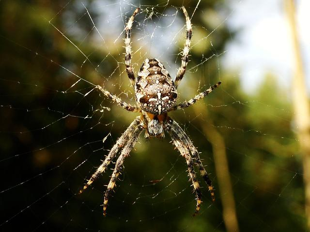Spider, Arachnid, Spider's Web, Insect, Nature, Animals