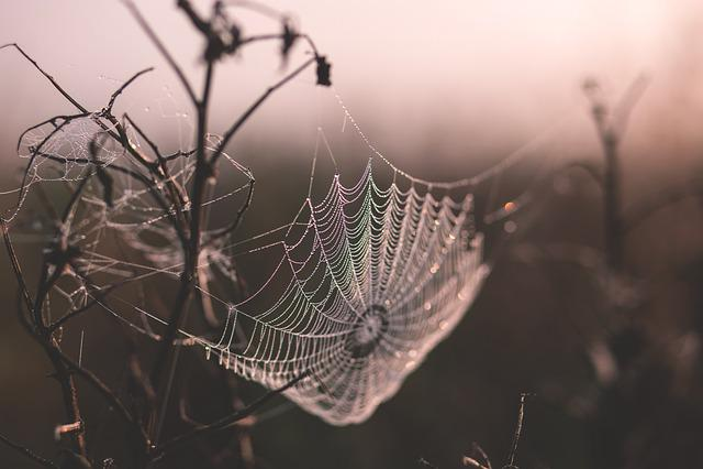 Cobweb, Depth Of Field, Spiderweb, Twigs, Web, Wet