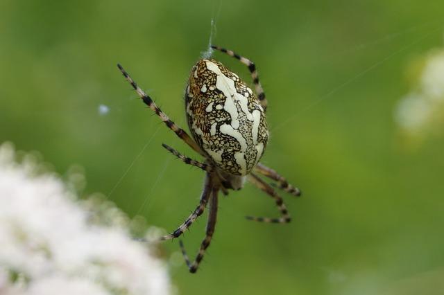 Spin, Fauna, Bug