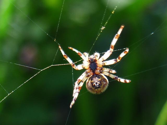 Spider, Spnnentier, Bottom, Spin, Cobweb