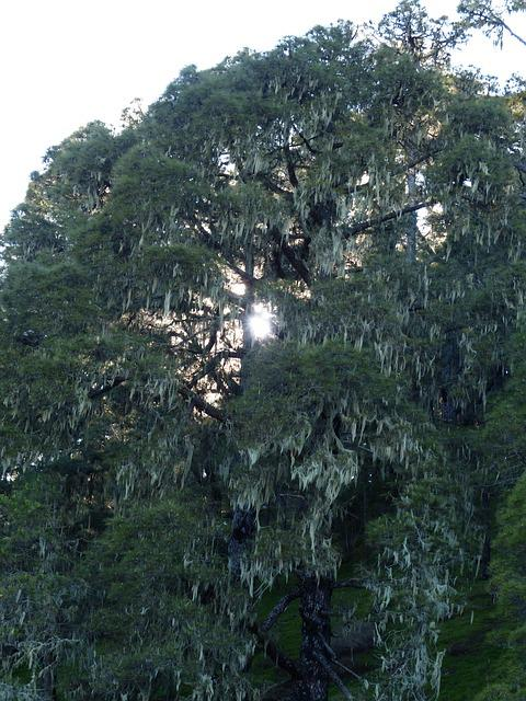 Tree, Bemoost, Weave, Old, Overgrown, Spinning Netted