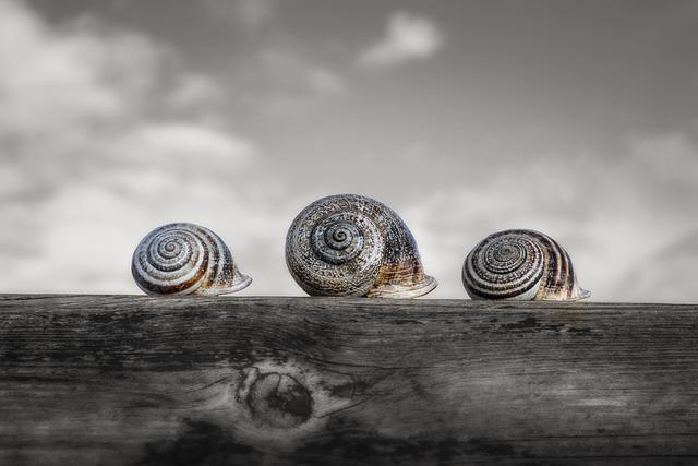 Snails, Molluscum, Shell, Spiral