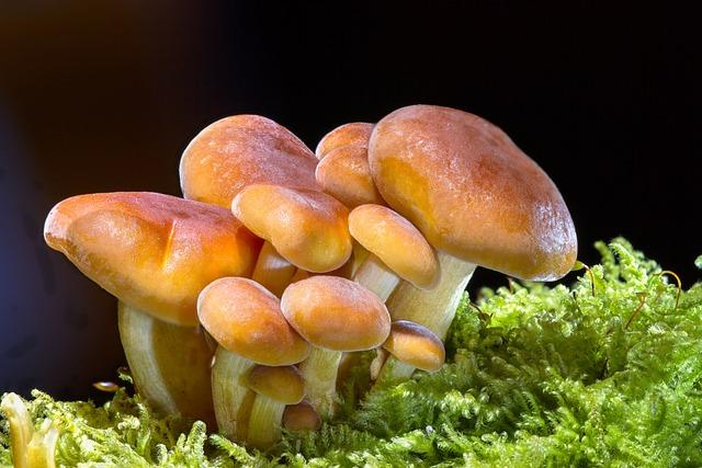 Mushroom, Sponge, Mini Mushroom, Small Mushroom