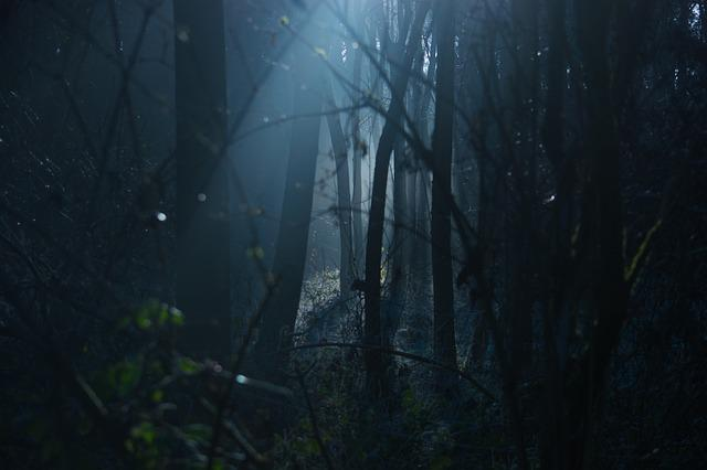 Dark, Moody, Scary, Spooky, Natural, Woods, Forrest