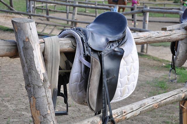 Horses, Riding, Saddle, Sport, Jockey
