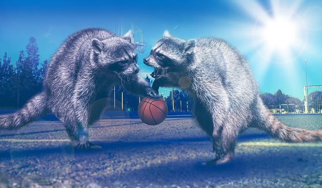 Basketball, Sport, Play, Basketball Hoop, Sports Ground