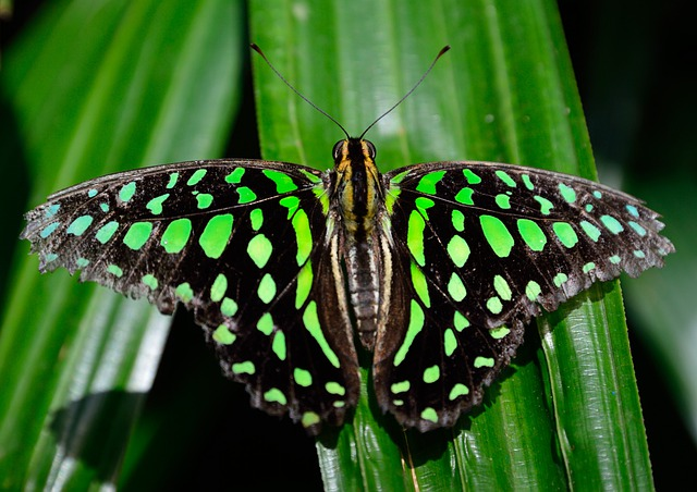 Butterfly, Spotted, Wings, Pattern, Colorful, Macro
