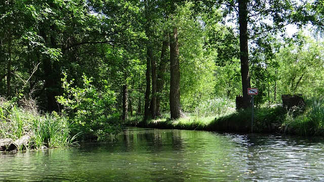 Spreewald, Depth, Landscape, Spree, Channel