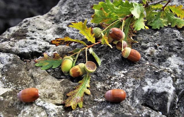 Sprig, Rock, Oak, Stone, Gray, Foliage, Closeup, Leaf