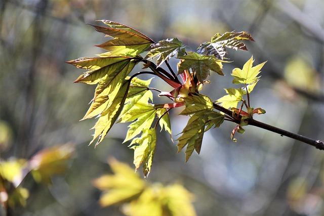 Spring, April, Sprig Leaves, Young