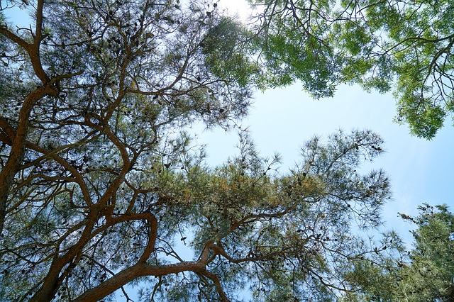 Tree, Branches, The Leaves Are, Nature, Spring, Sprig