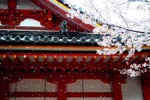 Spring, Wind, Petals, Sakura, Asia, Wallpaper