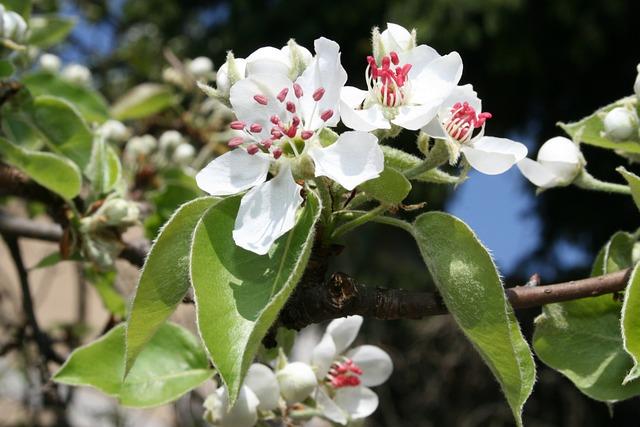 Spring, Flowers, Spring Awakening, Plant