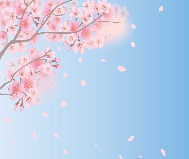 Spring Background, Cherry Blossoms, Sky, Spring, Bloom