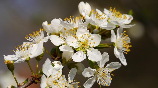 Bee, Flower, Spring
