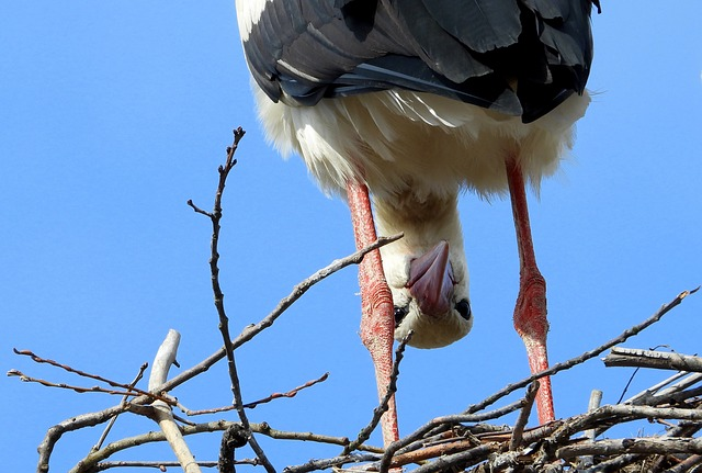 Stork, Bird, Socket, Spring, April Fools, Plumage, Wing