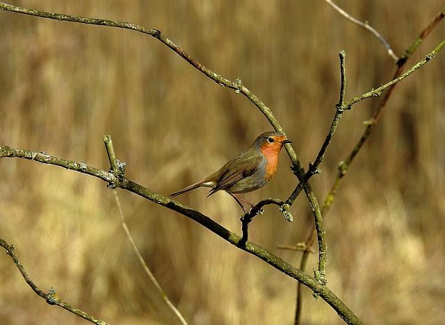 Birds, Nature, Spring