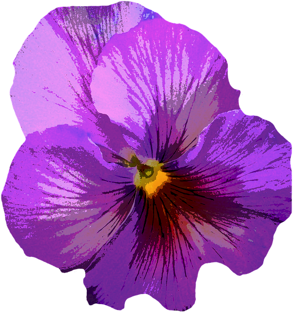 Pansy, Blossom, Bloom, Purple, Flower, Spring, Yellow