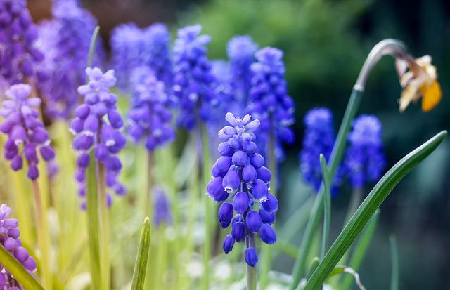 Nature, Flower, Blossom, Bloom, Plant, Spring Blossom