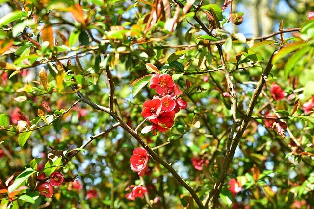 Blossom, Bloom, Red Flower, Blossom, Flower, Spring