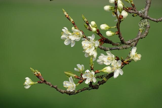 Flowering Twig, Spring, Bud, Bloom, Flowers, Nature