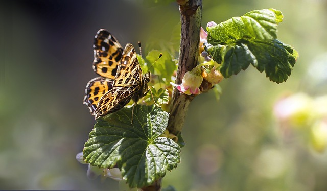 Butterfly, Butterflies, Insect, Nature, Spring, Flower