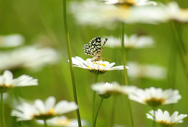 Flowers, Spring, Insect, Butterfly, Green, Meadow