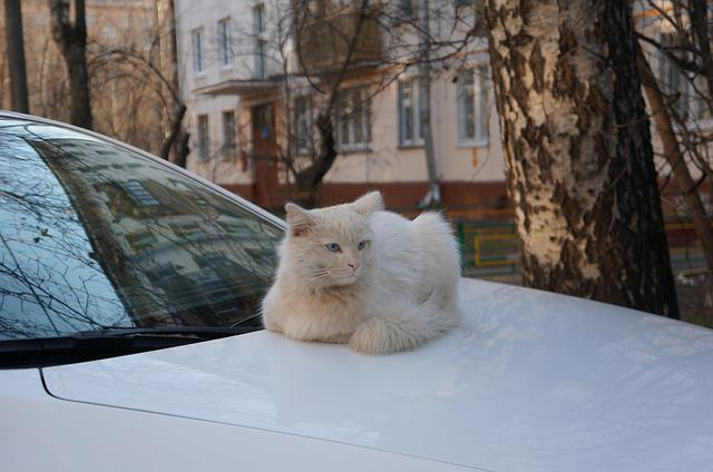 Spring, Cat, Cats, White Cat, Street Cat
