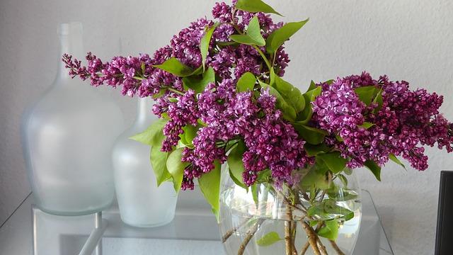 Lilac, Vase, Lilac Flower, Decoration, Spring