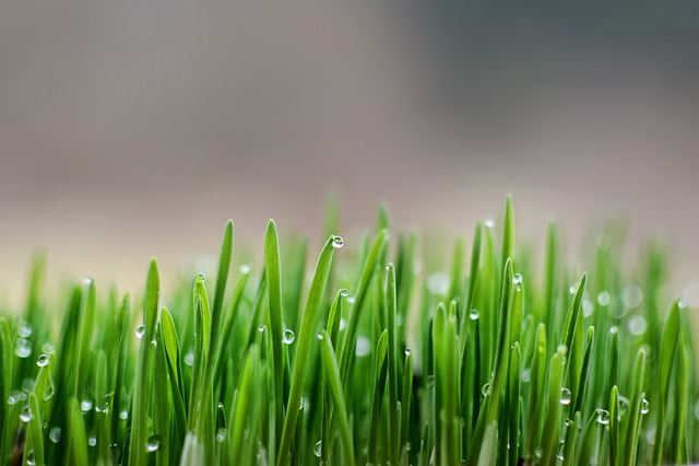 Spring, Dew
