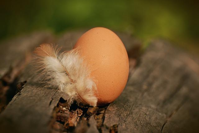 Egg, Hen's Egg, Brown Egg, Spring, Protein