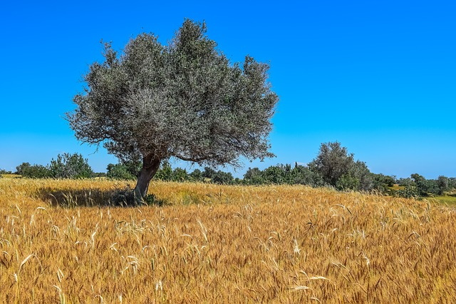 Nature, Tree, Landscape, Sky, Field, Spring