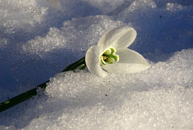 Flower, Winter, Spring, Plants, Snow, Sun
