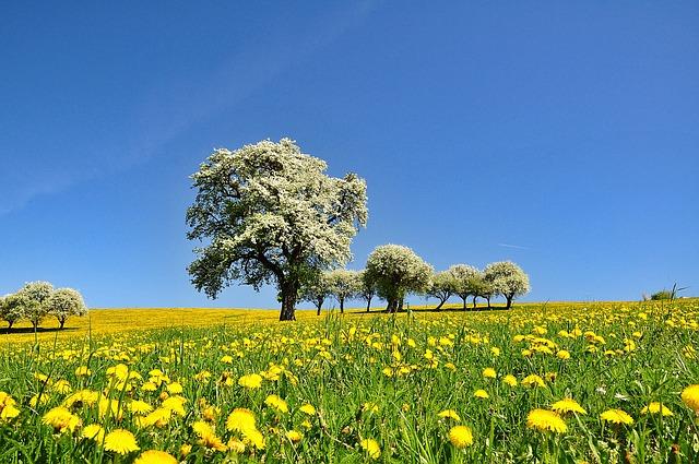 Nature, Landscape, Spring, Flowering Time, Blossom