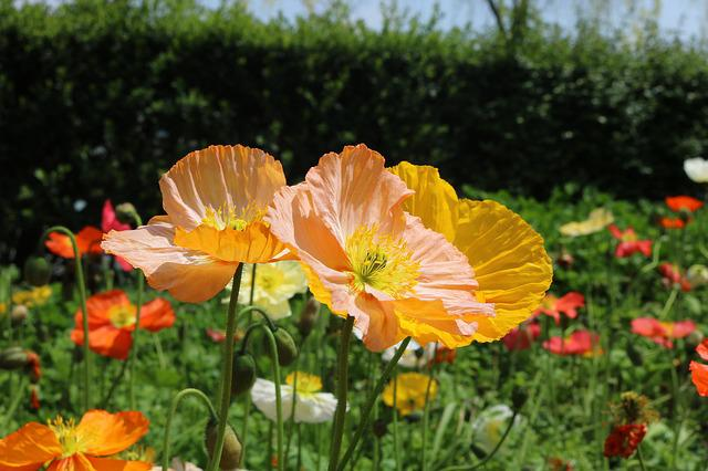 Flowers And Plants, Spring, Sunshine