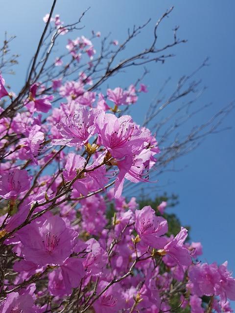 Spring Flowers, Azalea, Azalea Flowers