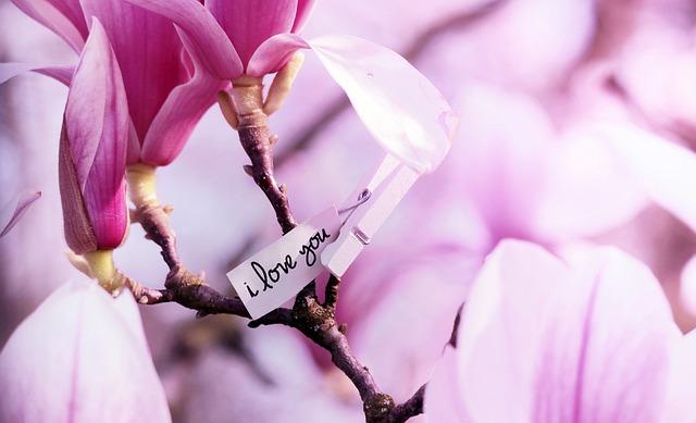 Tree, Magnolia, Spring, Pink, Nature, Flowers, Bloom