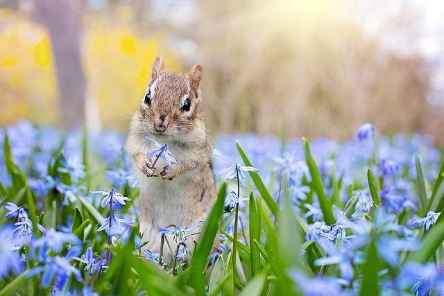 Chipmunk, Garden, Spring, Flowers, Animal, Cute